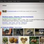 GoogleSearchPlusYourWorld